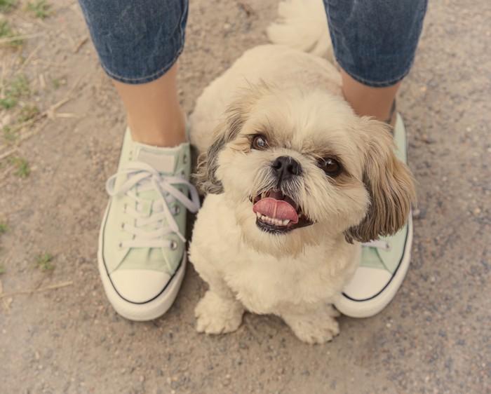 bisogna comunicare con il cane