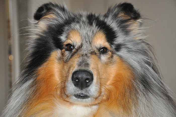 Oban è un cane insicuro