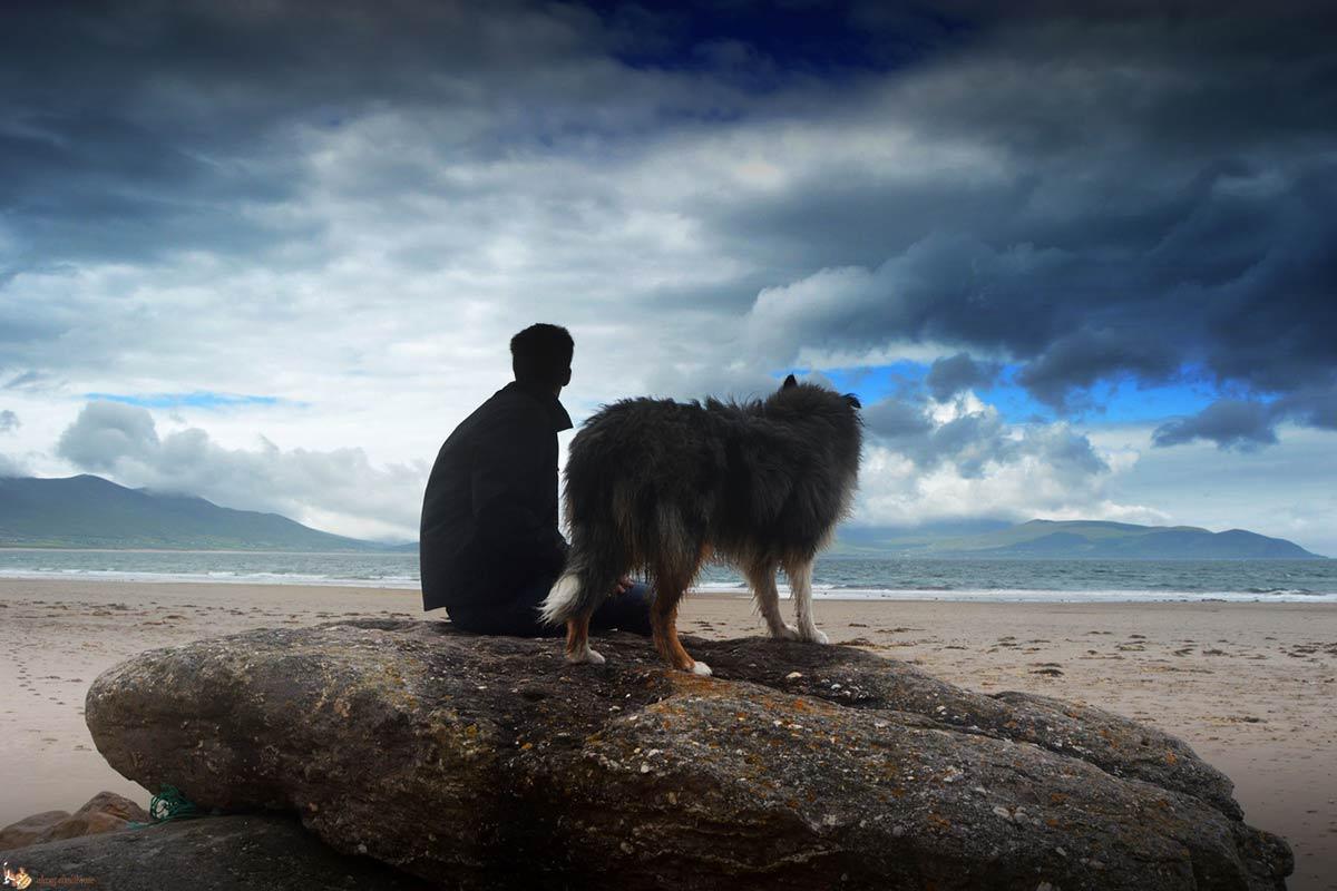 8 cose da cui si riconosce il buon proprietario di cane