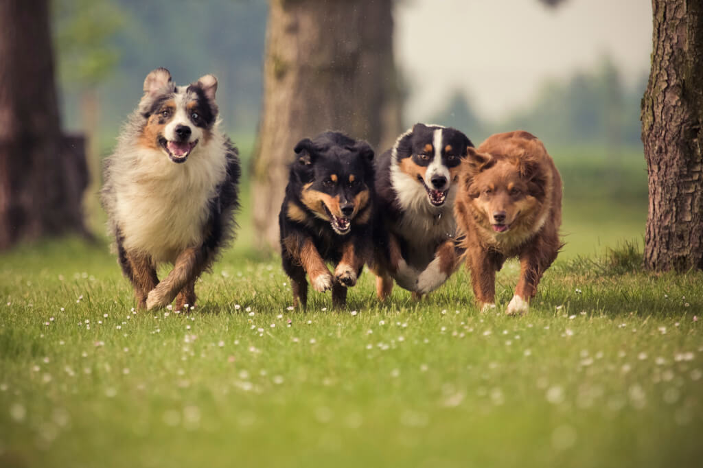 Esiste l'amicizia tra i cani?