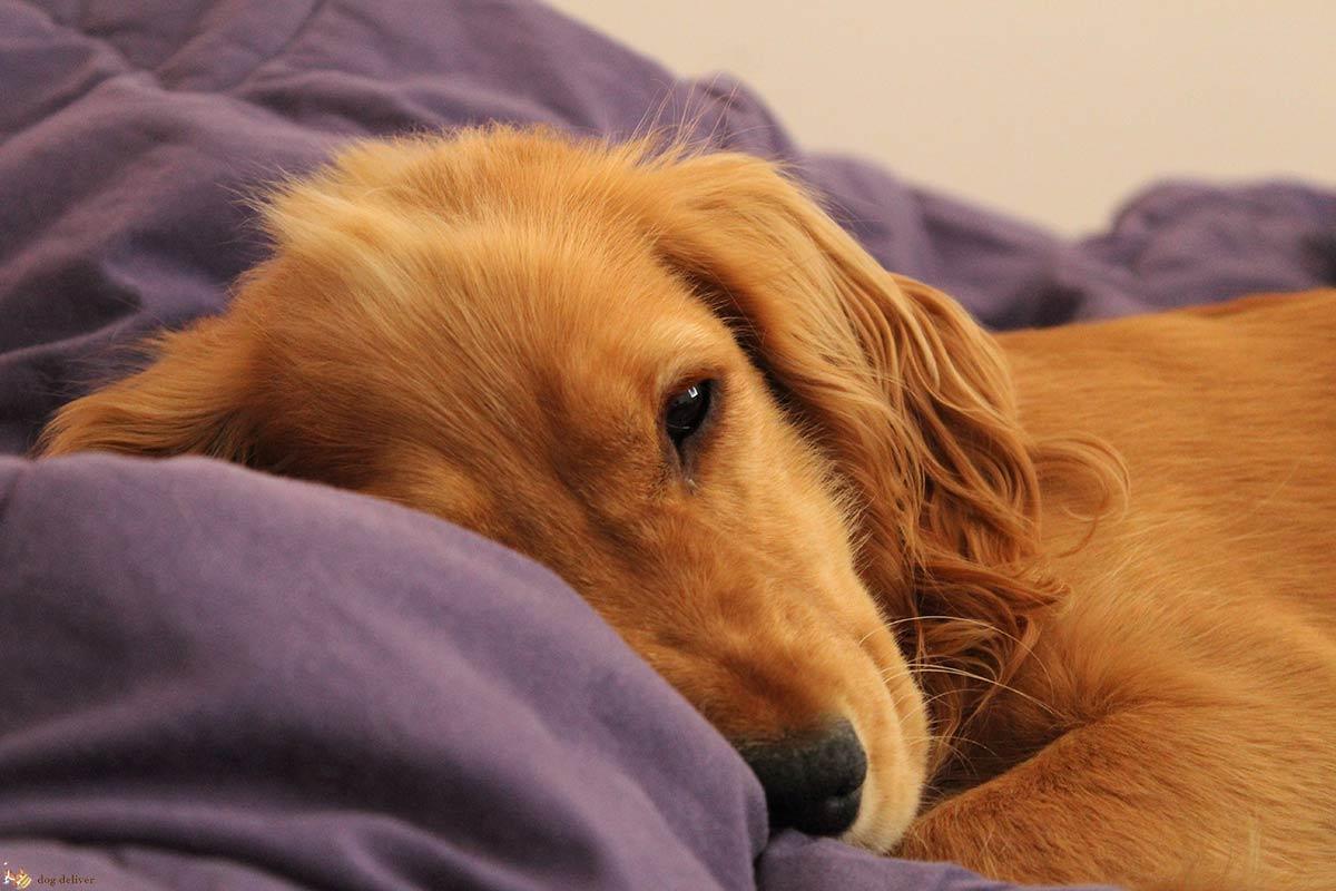 Il cane insicuro