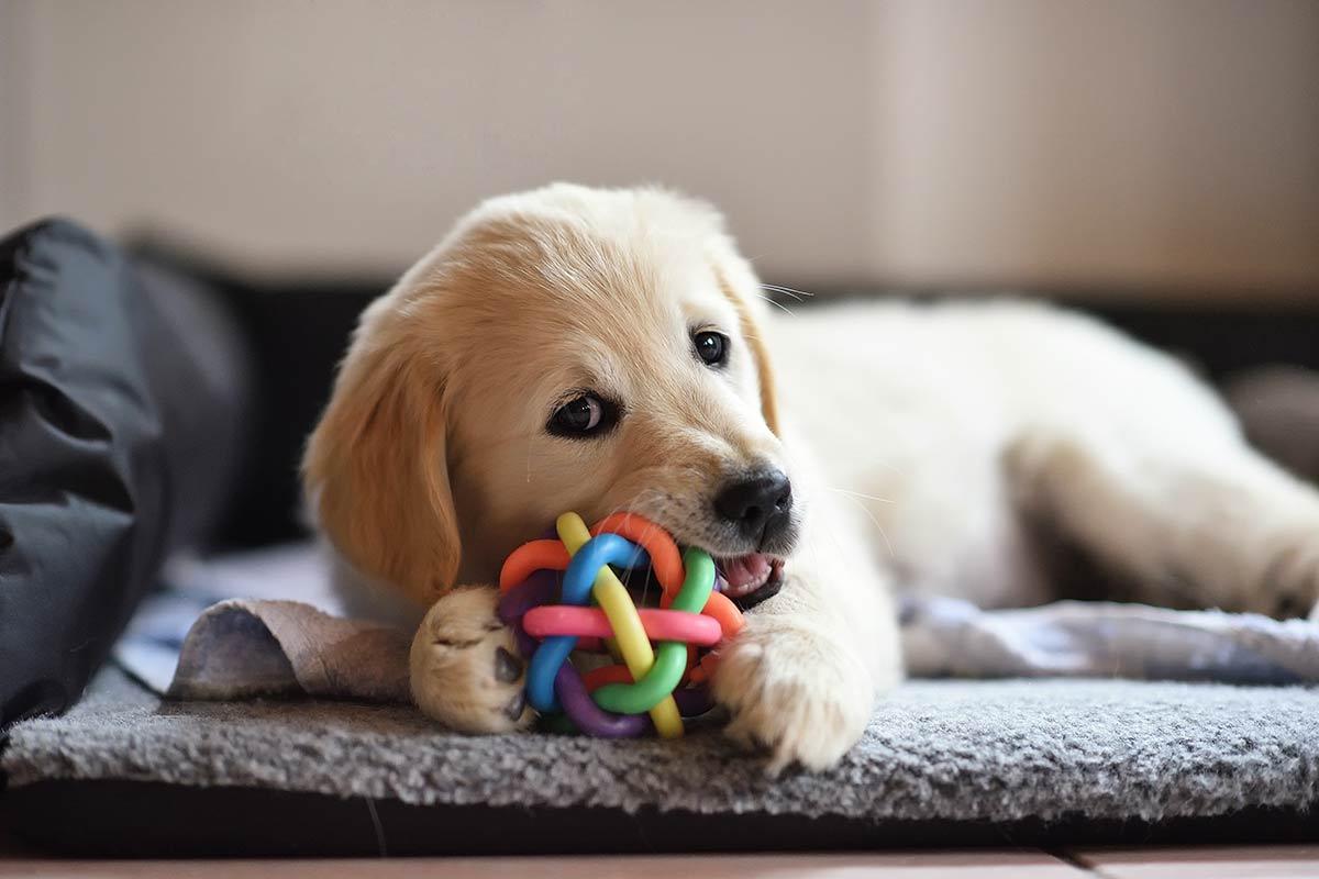 Scopri se c'è qualcosa che non sai sul tuo cane