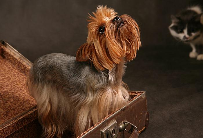 anche per i cani il trasloco è stressante