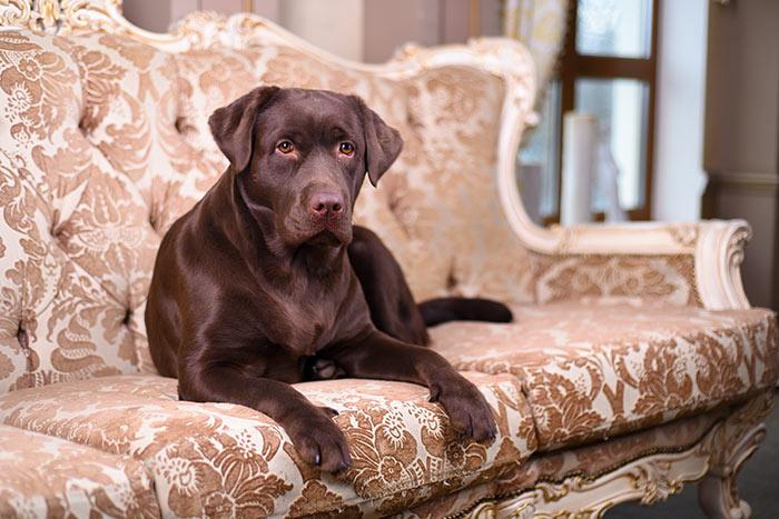 Qualche punto fermo e l'amore dei proprietari sono importanti per aiutare il cane ad affrontare un trasloco