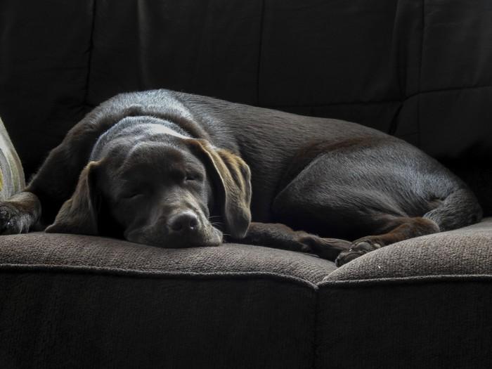 E 39 ok che il cane stia sul letto o sul divano dogdeliver - Perche i cani scavano sul divano ...