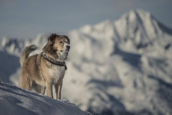 La postura dei cani indica il loro stato d'animo e le loro intenzioni