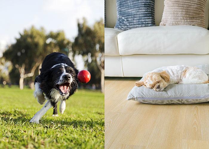 Cani stanchi non distruggono