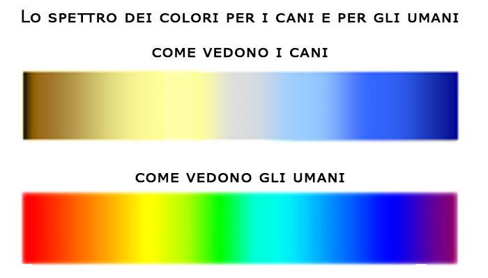 Lo spettro di colori come lo vedono i cani e come lo vedono gli umani