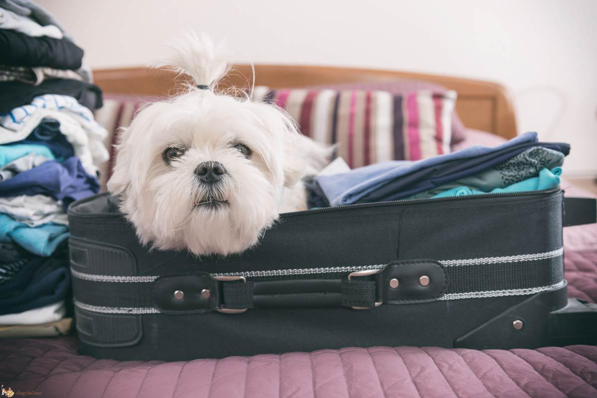 I cani e il trasloco