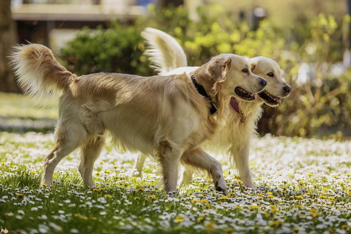 Le straordinarie capacità dei cani: l'apprendimento sociale