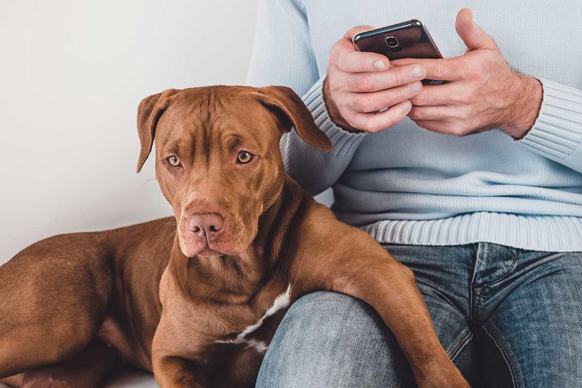 12 falsi miti sui cani smontati uno a uno