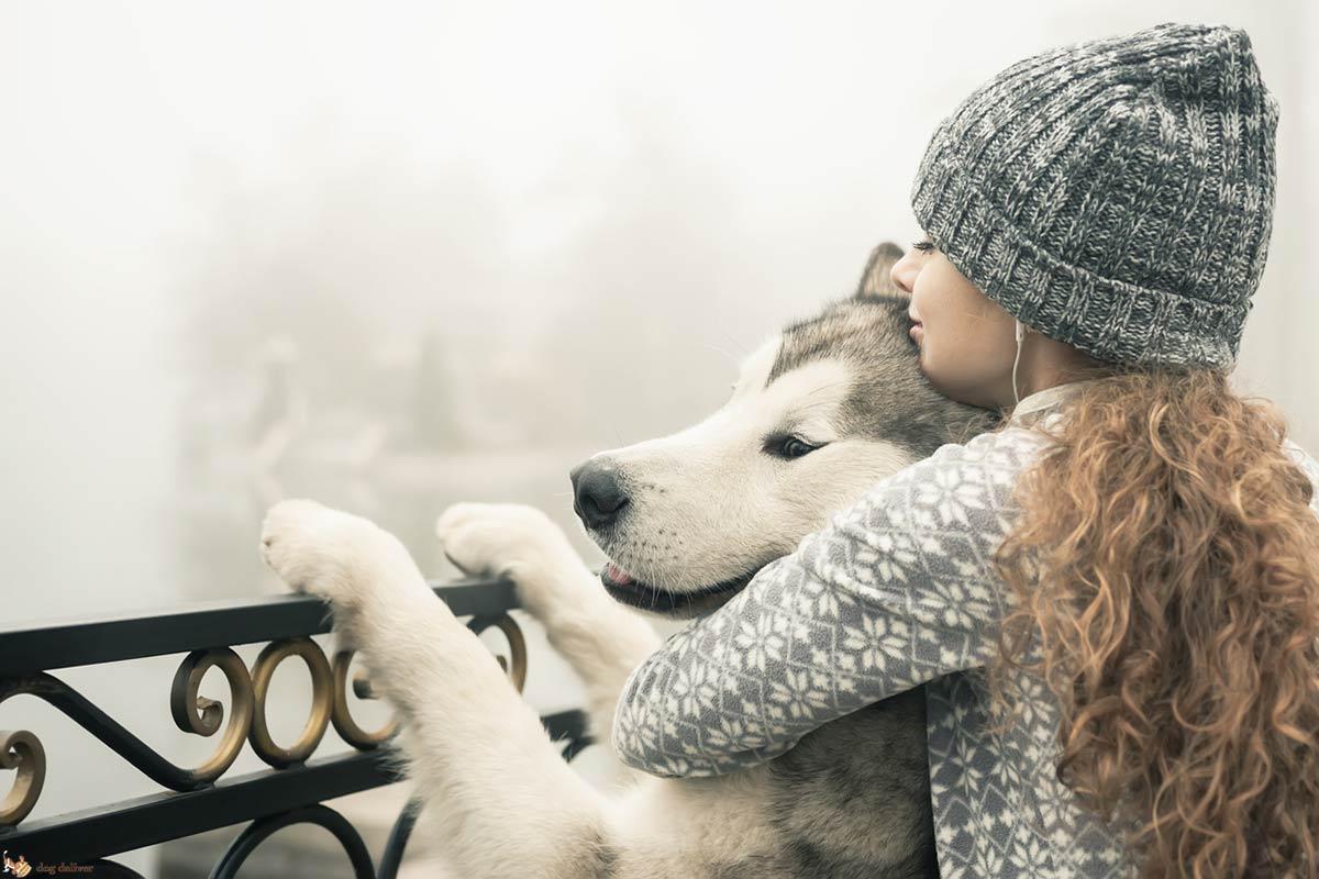 Come i cani sono importanti per gli umani