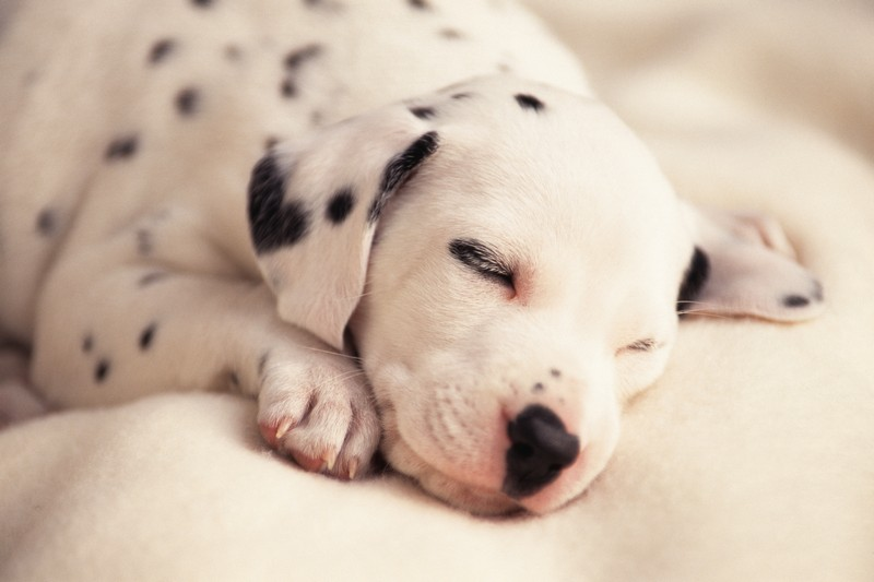 15 Razze Di Cane Che Non Odorano Dogdeliver