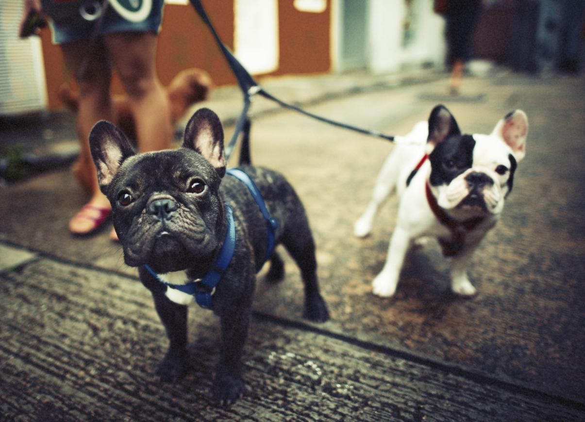 Cani: bisogna rispettare le distanze