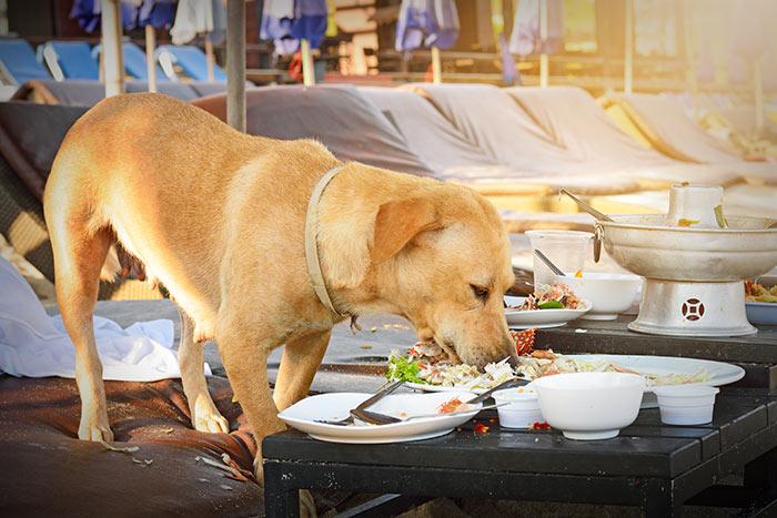 Perch tanto difficile affidare il proprio cane dogdeliver - Porcherie a letto ...