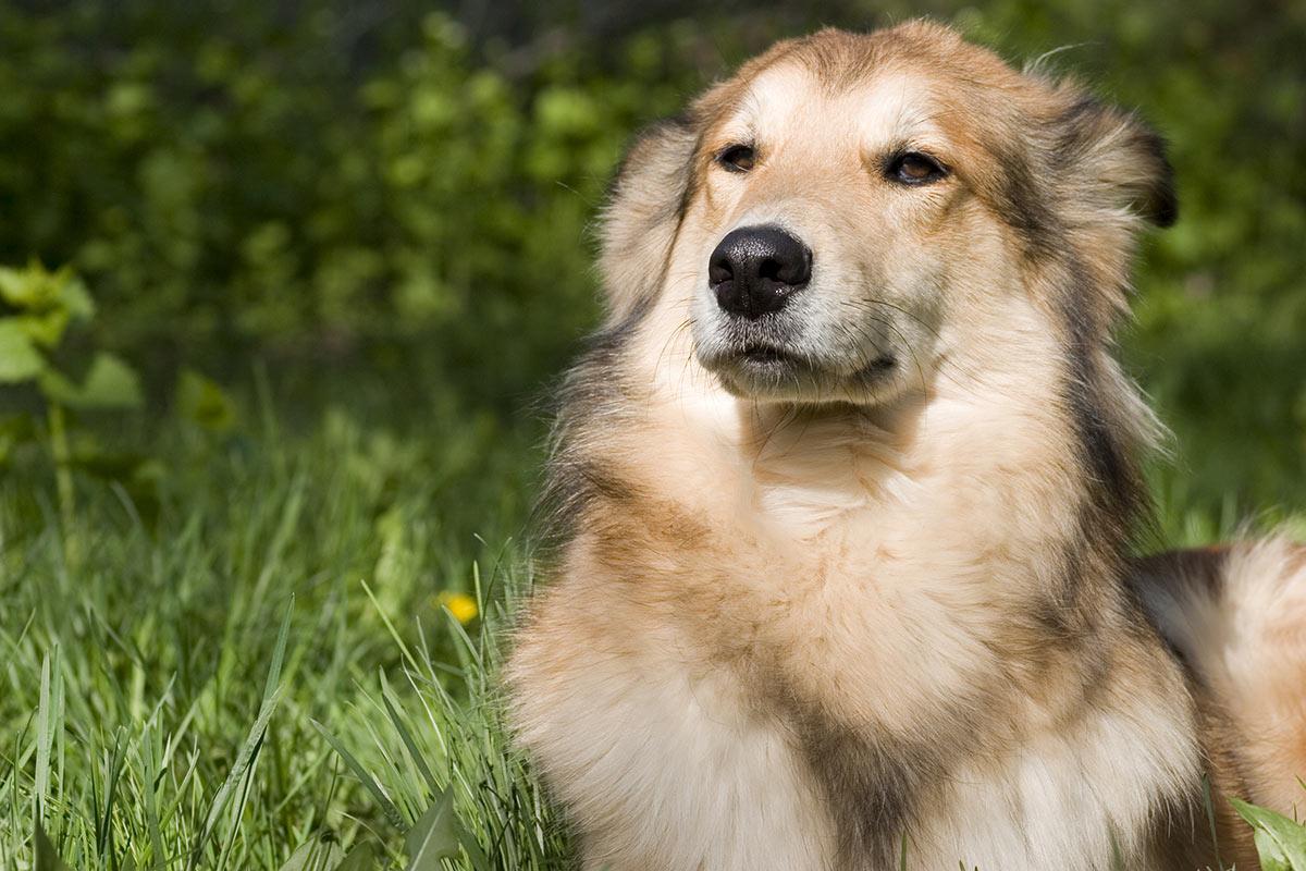 Perchè con i cani funziona solo il metodo gentile