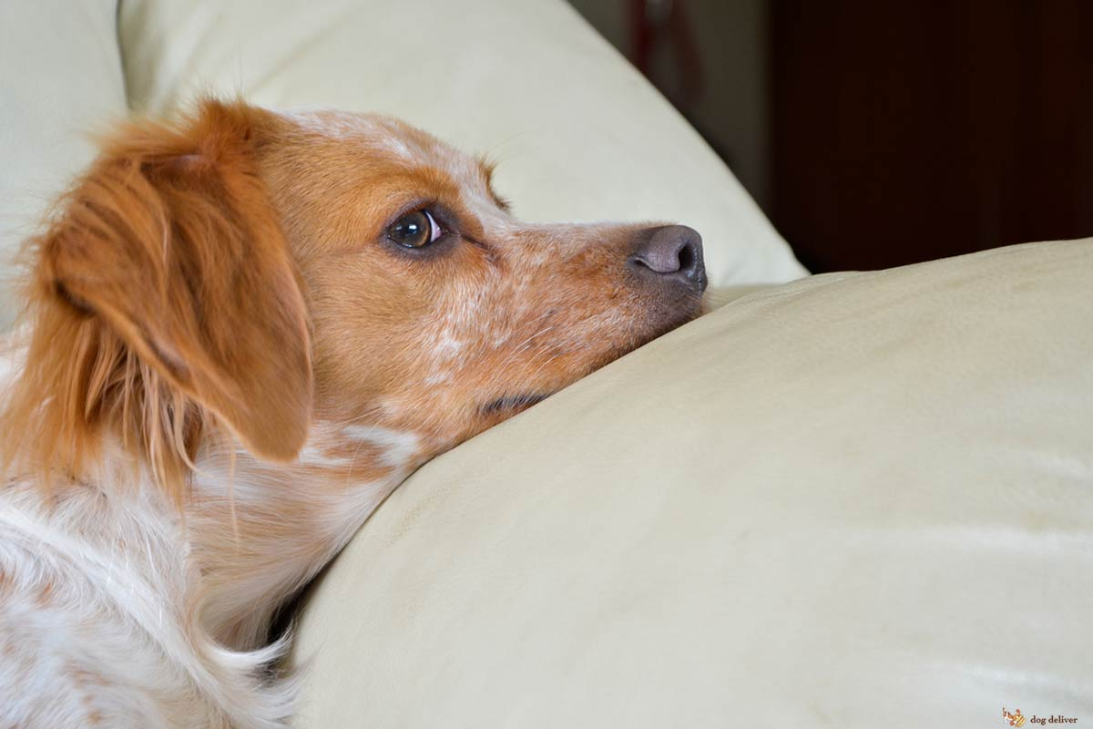 I cani vedono veramente i fantasmi?
