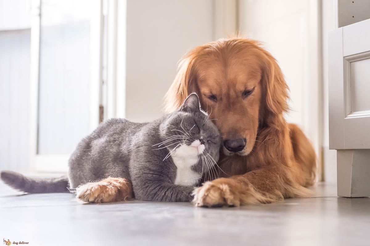 Come conoscere i gatti può aiutare con i cani