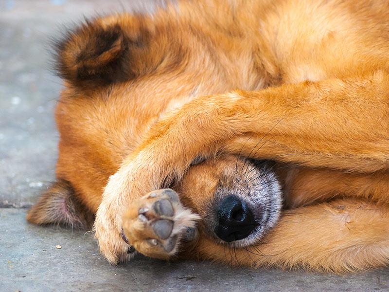 Conoscere e capire i cani