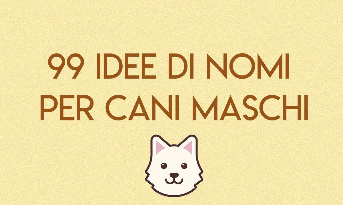 99 Idee Di Nomi Per Cani Maschi Dogdeliver