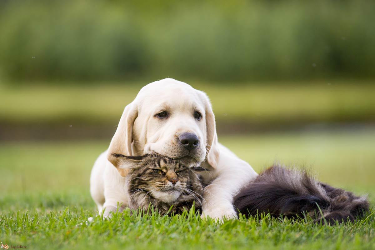 E' vero che i cani sono meno intelligenti dei gatti?