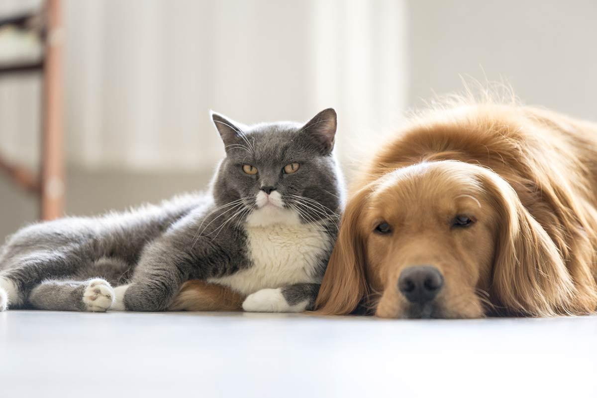 E Vero Che I Cani Sono Meno Intelligenti Dei Gatti Dogdeliver