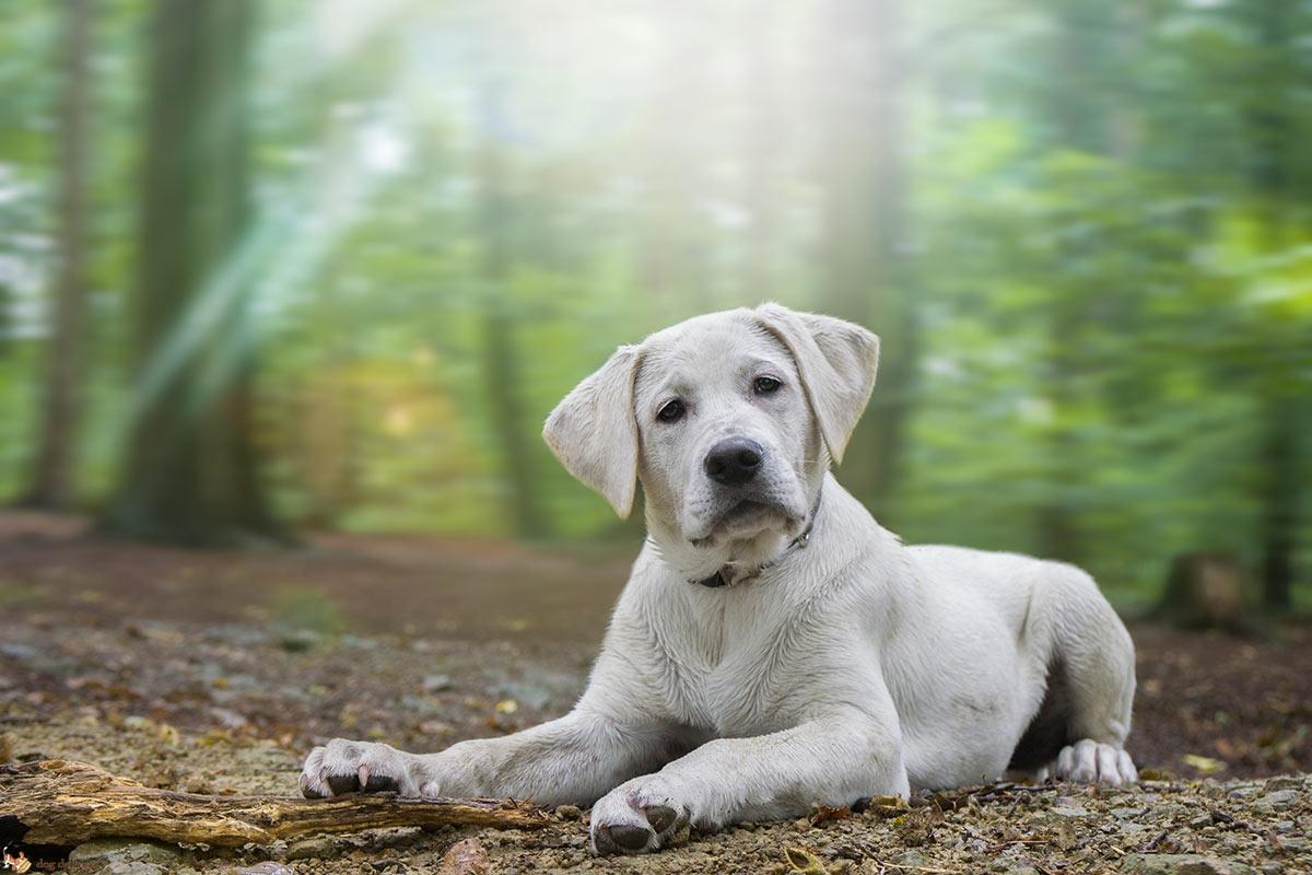 Come gli umani comunicano con i cani