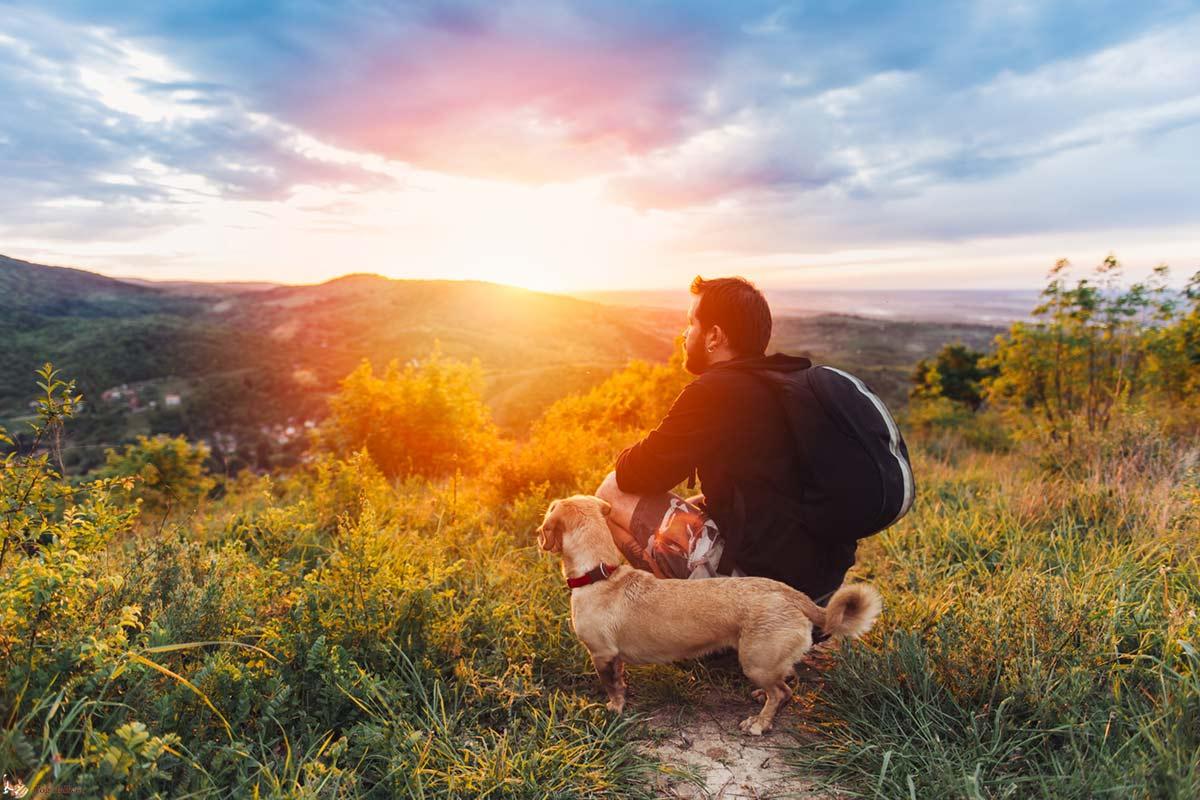 Perchè le uscite sono veramente importanti per i cani