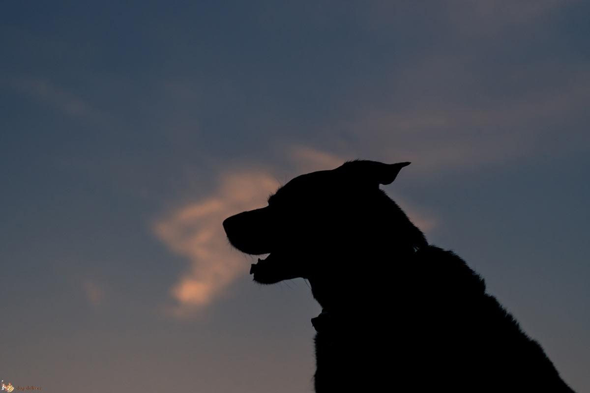 Capire cosa sta veramente comunicando il cane