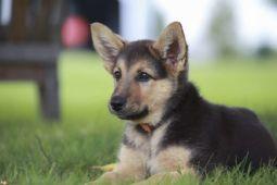 Alla scoperta dei cani