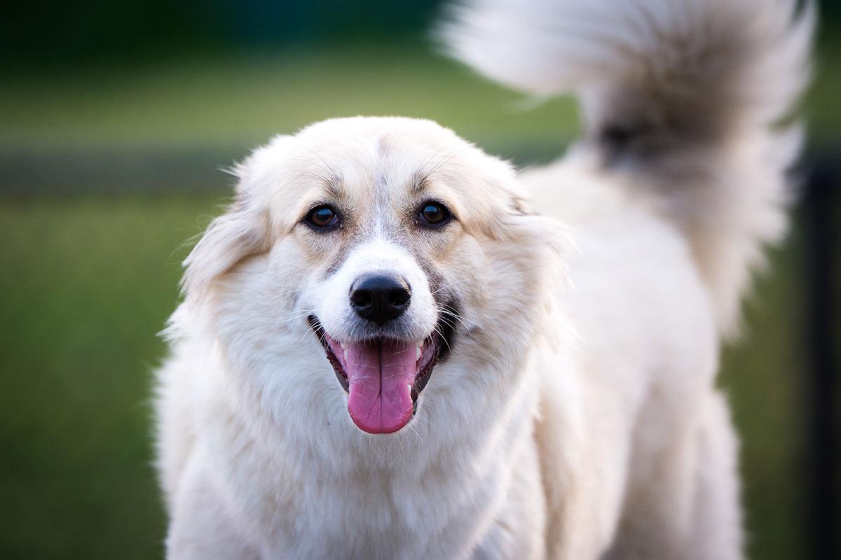 I cani come fanno a capire che li amiamo?