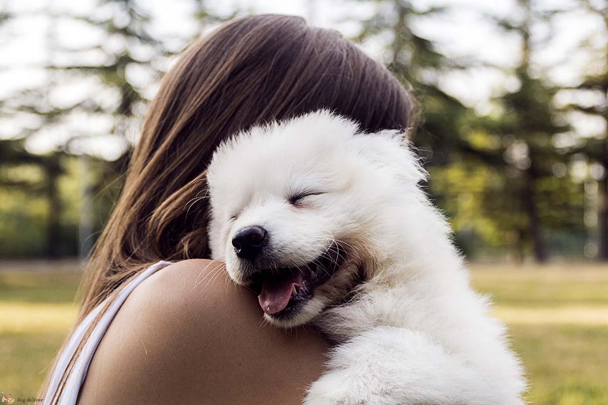 Come sono importanti gli umani per i cani