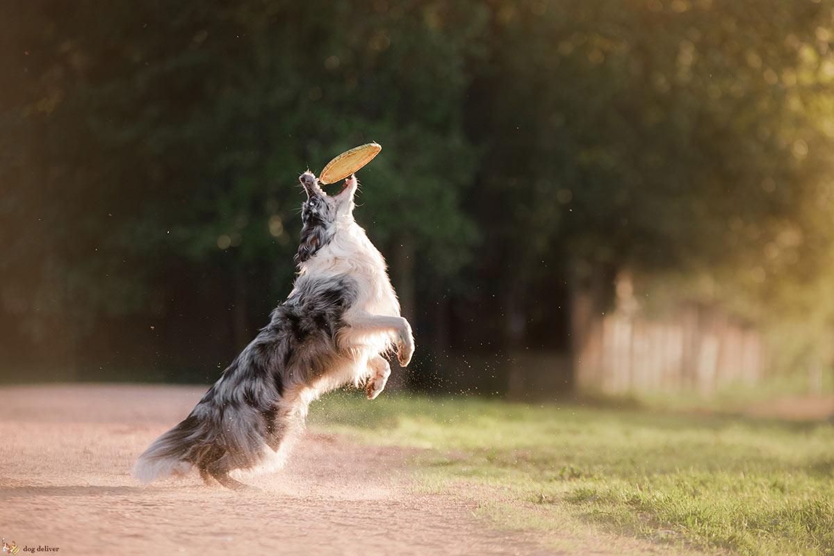 E' vero che i meticci sono più sani dei cani di razza?