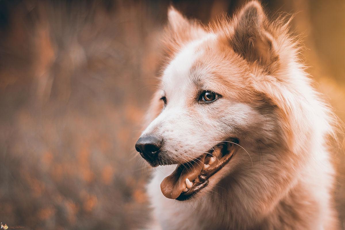 La comunicazione dei cani