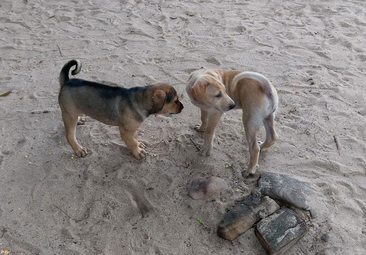 I cani e il linguaggio del corpo