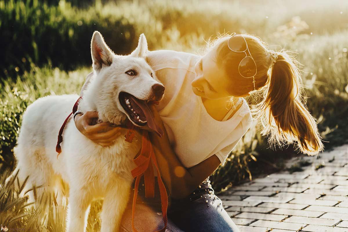 Quando il compagno è geloso del cane