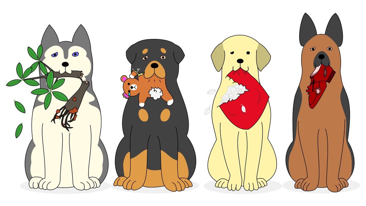 I disturbi alimentari nei cani: la Pica
