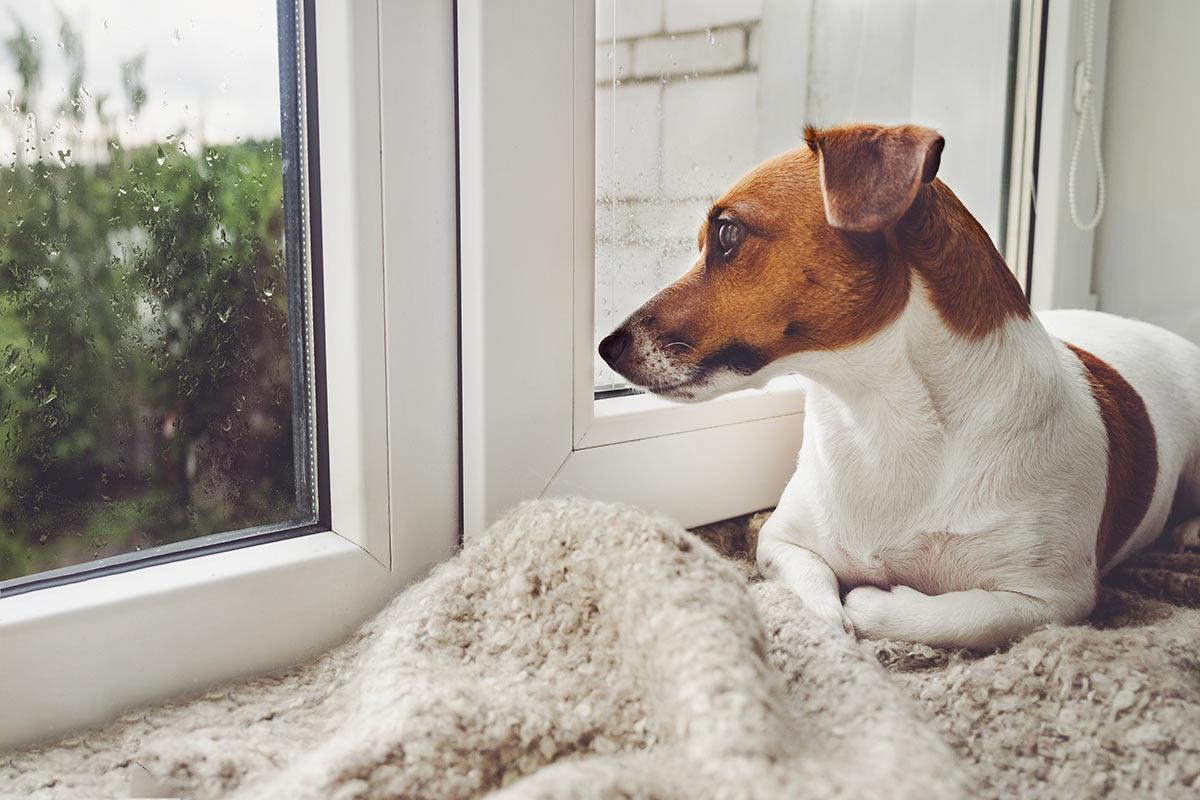 Per i cani è sempre meglio una casa o a volte è meglio il canile?