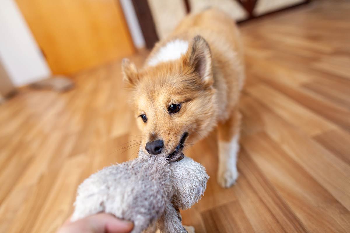 Parliamo di cani, di proprietari, di dominanza e di metodi coercitivi