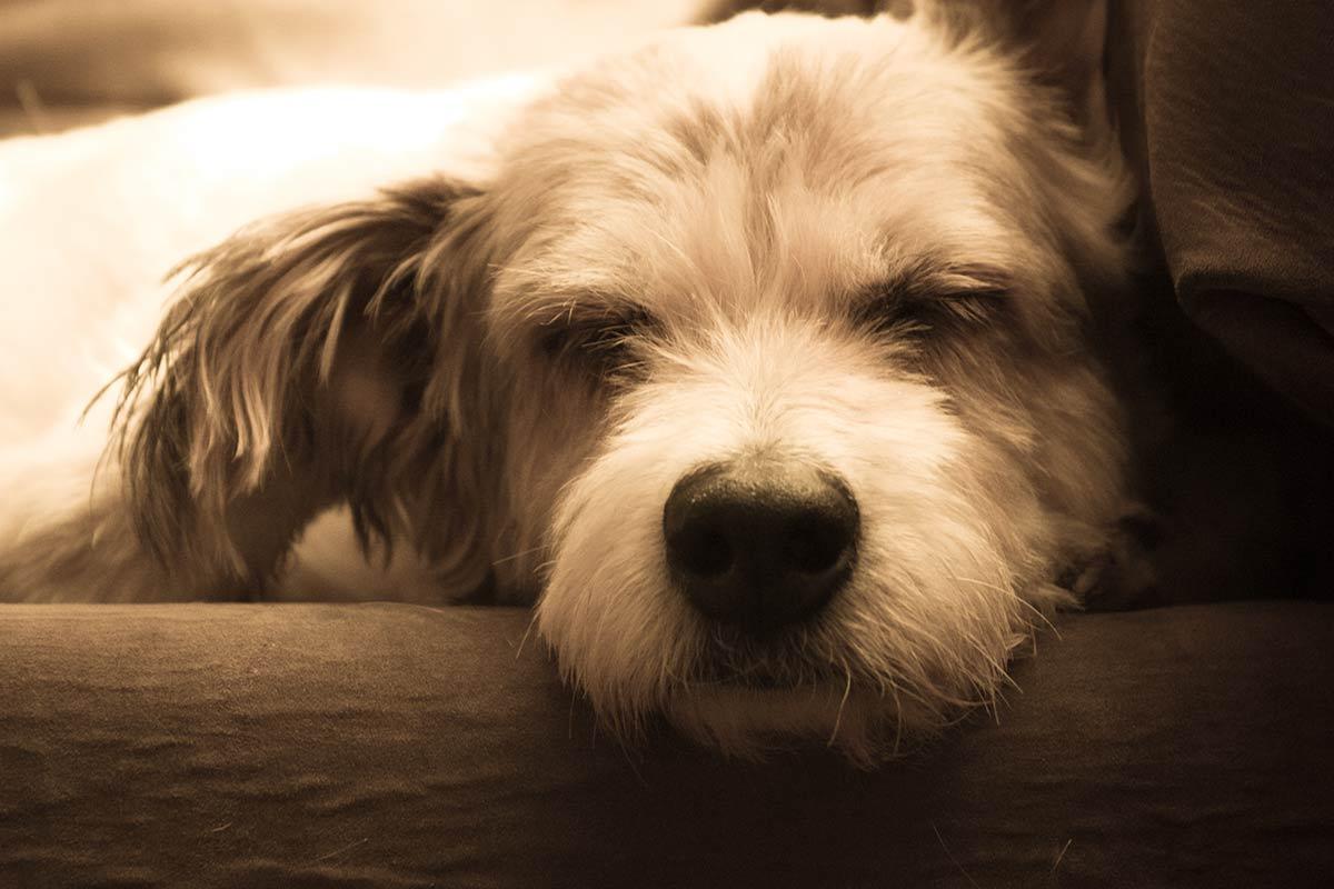 I proprietari di cane devono essere responsabili. Tu lo sei?