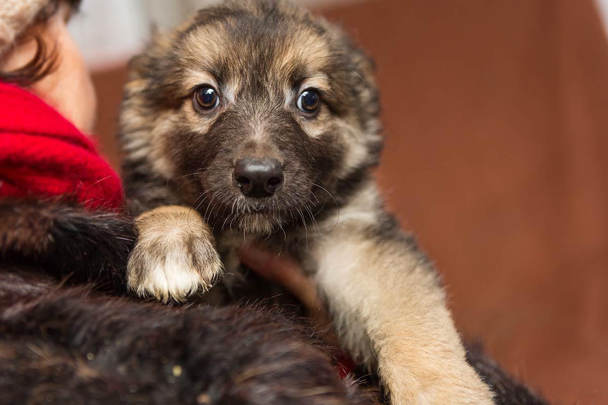 Perchè bisogna confortare il cane quando ha paura