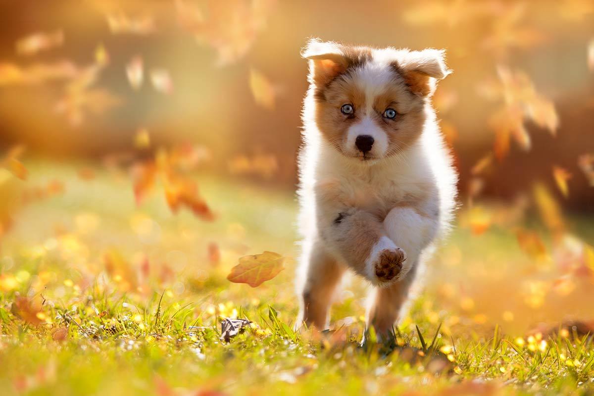 Parliamo (di nuovo) di proprietari e di maltrattamento dei cani