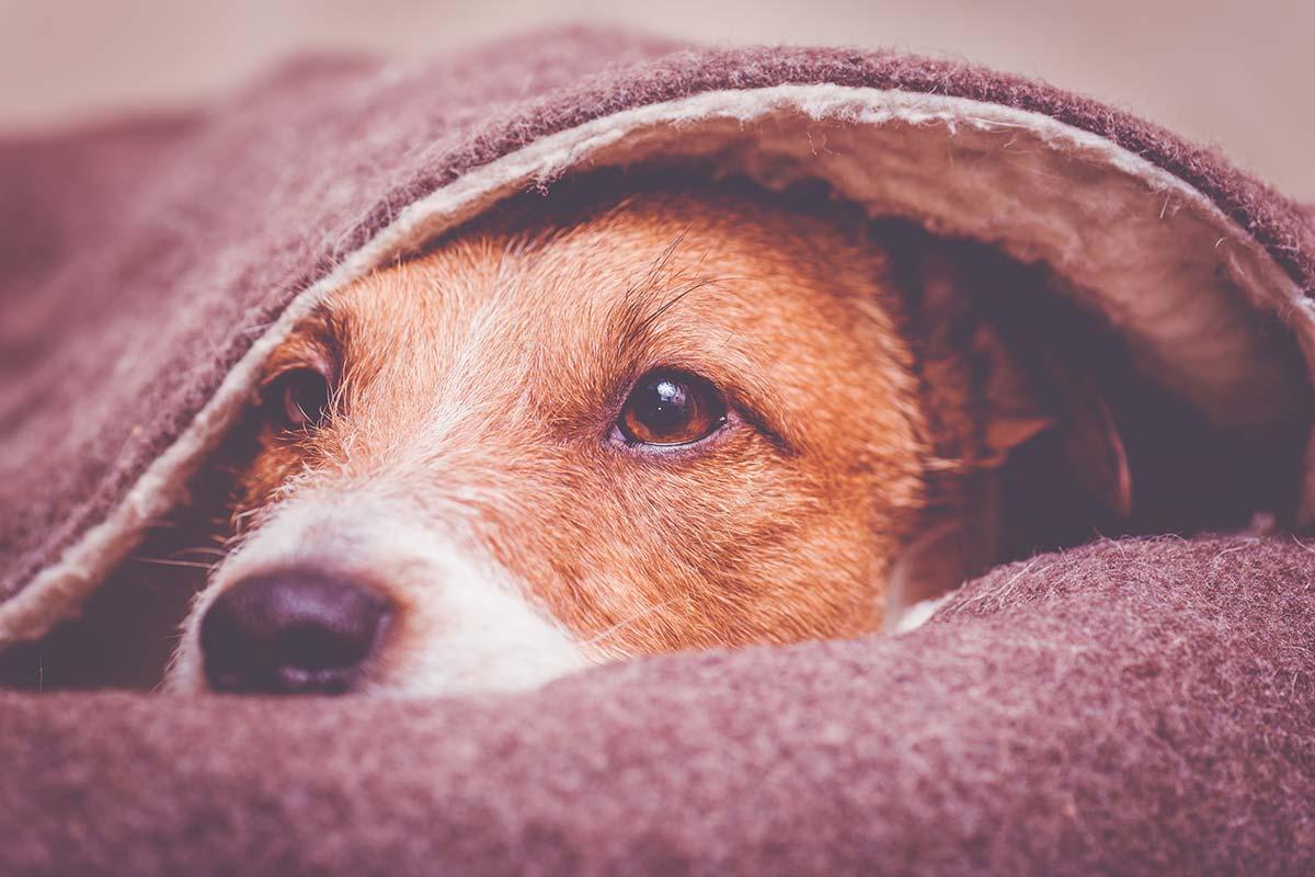 I cani e l'ansia da separazione