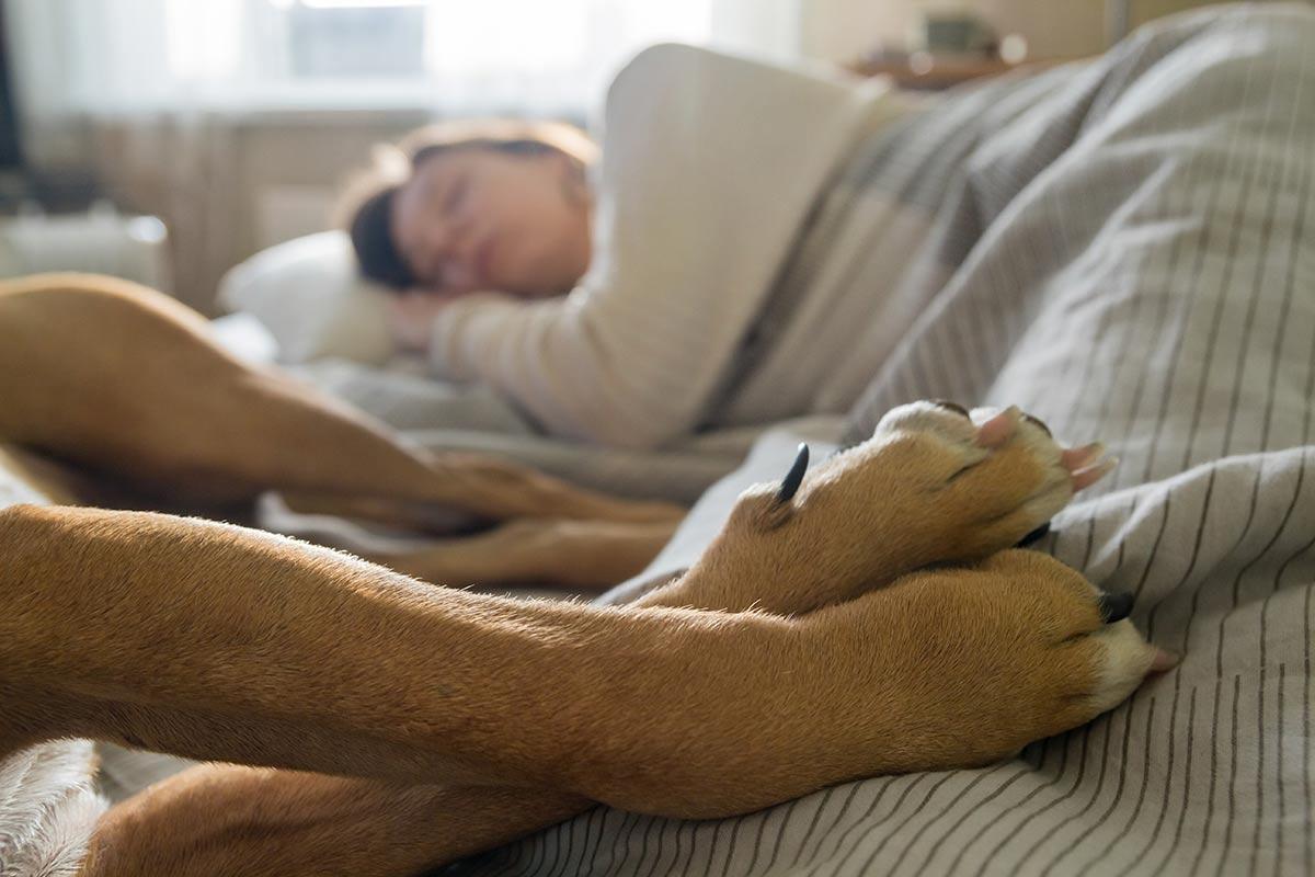 Con il cane sul letto si dorme meglio