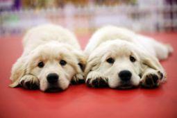 Non esistono due cani uguali