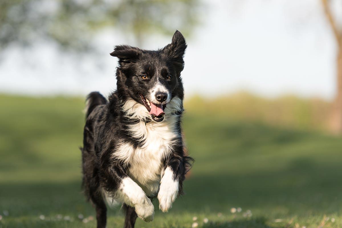 La personalità dei cani può cambiare nel tempo