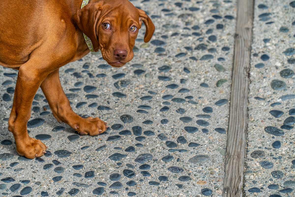 I cani e la paura