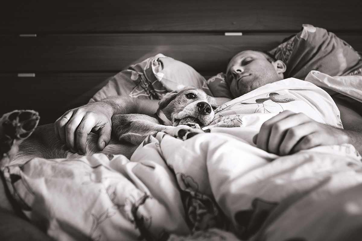 Perchè fa bene dormire con il cane sul letto