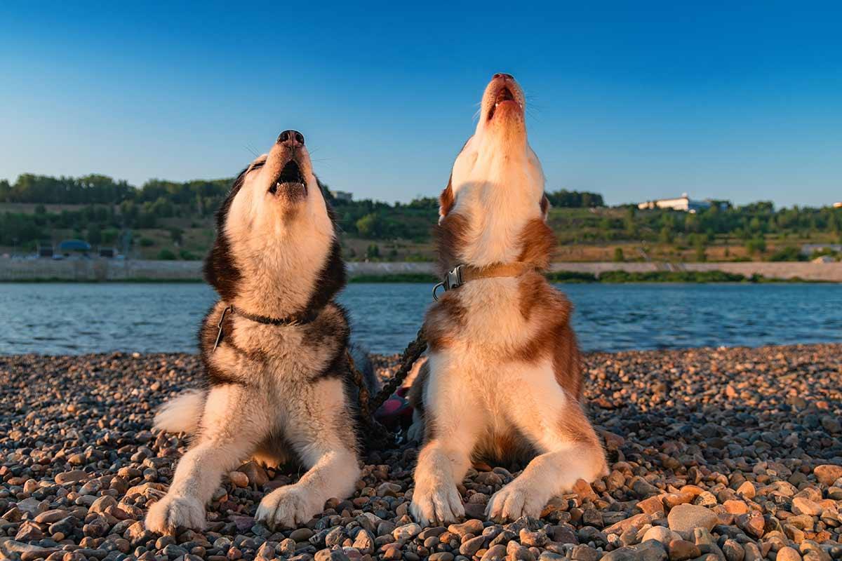 Come capire il proprio cane