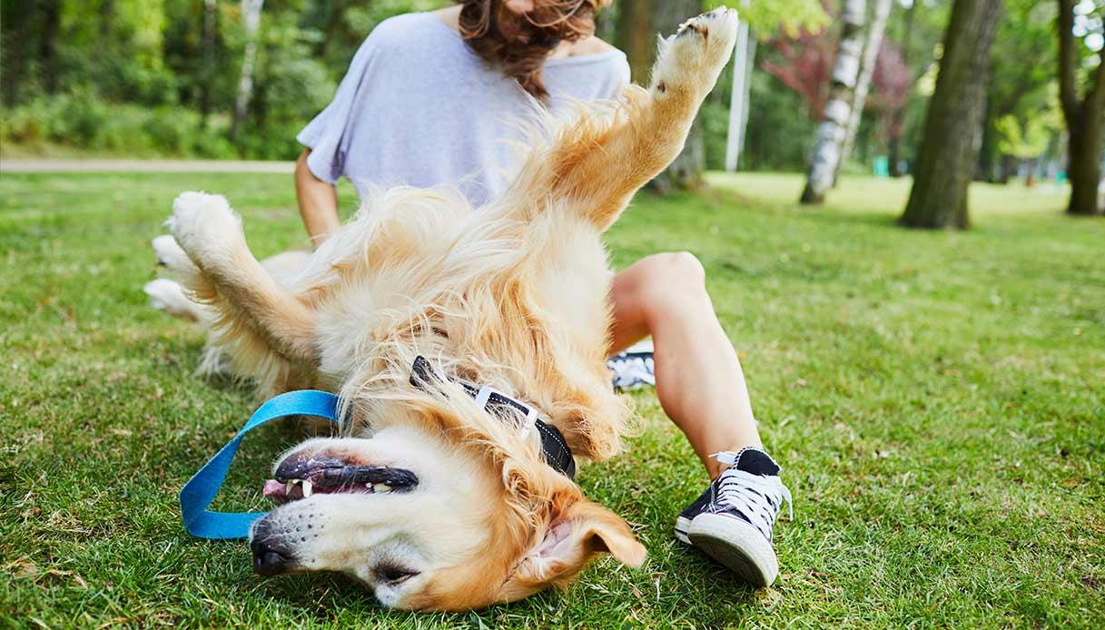 Felici insieme: una piccola guida per i proprietari di cane